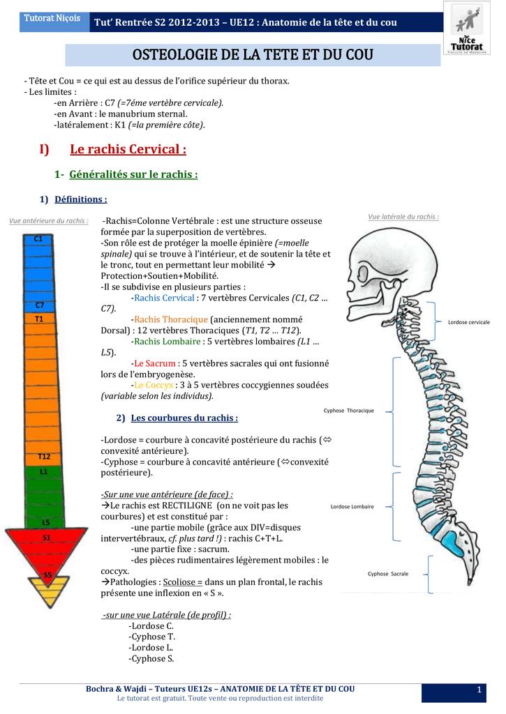 vaisseaux du cou anatomie