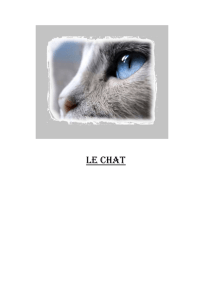Le chat 1 Dénomination
