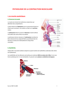 1 - Physiologie de la contraction musculaire