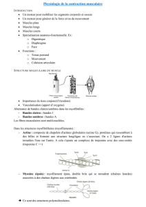 Physiologie de la contraction musculaire