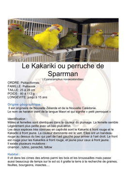 Kakarikis à front rouge
