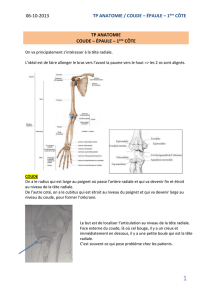 Luxation sterno claviculaire pdf writer