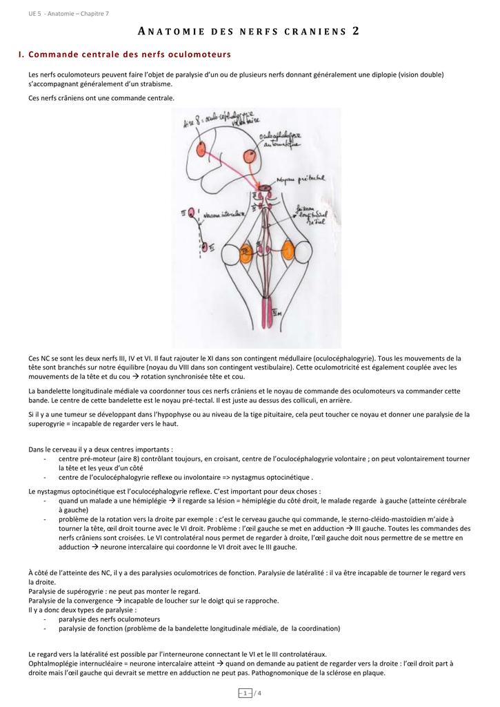 Anatomie des nerfs crâniens 2