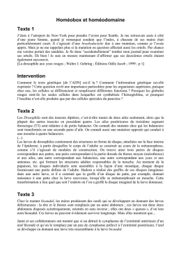 Homéobox et homéodomaine Texte 1 Intervention Texte 2 Texte 3