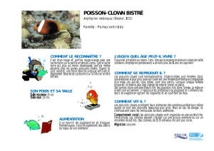 poisson-clown bistré - IFRECOR Nouvelle