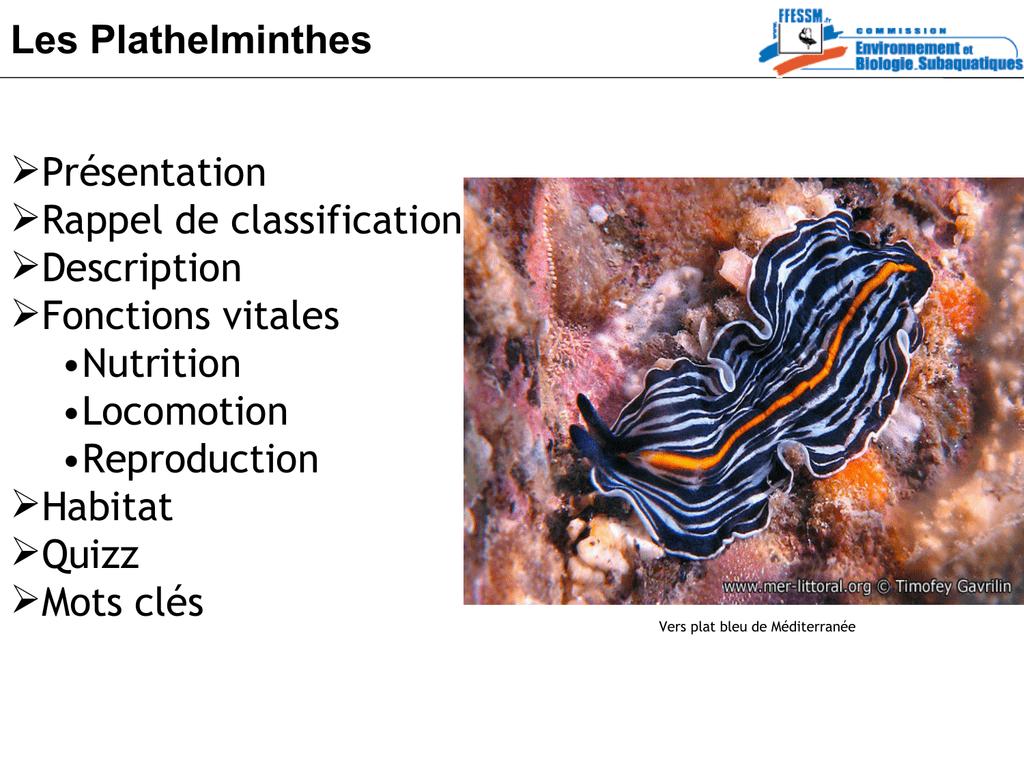 Plathelminthe planaire Planaria helmint összehasonlító táblázat