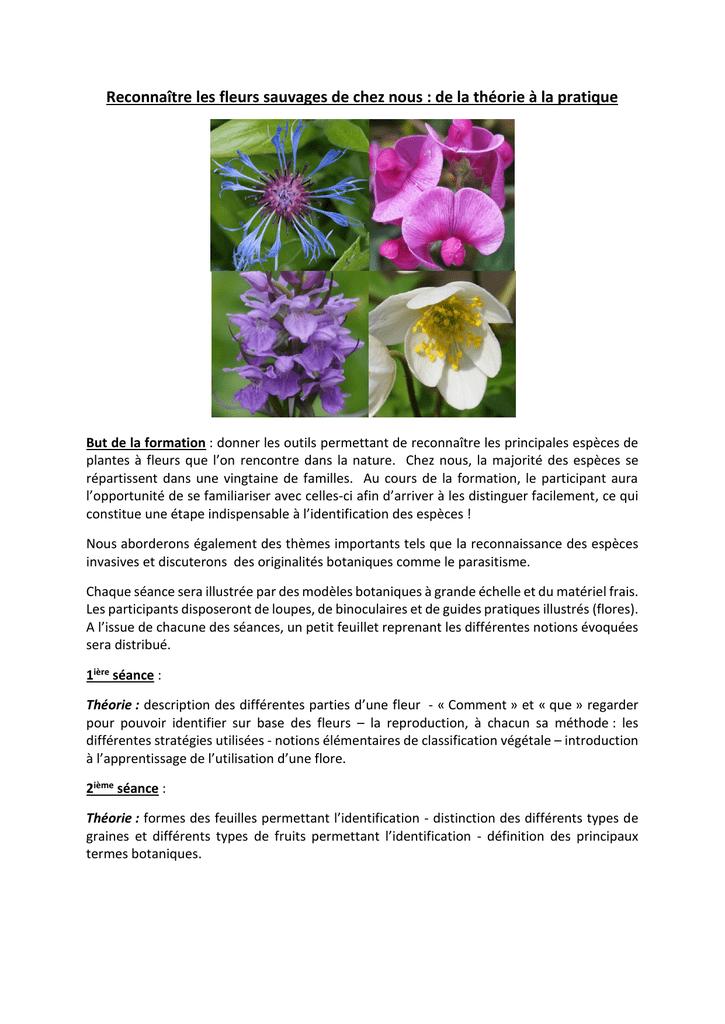 Reconnaitre Les Fleurs Sauvages De Chez Nous De La Theorie