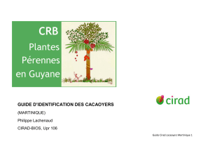 guide d`identification des cacaoyers - Agritrop