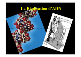 La Réplication d`ADN - Fichier