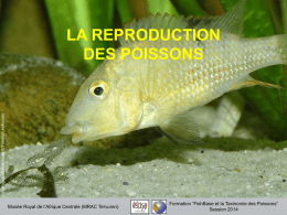 LA REPRODUCTION DES POISSONS