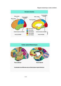 Introduction à la Neurologie Pédiatrique