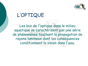 l`optique - Amphiprion