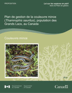 Couleuvre mince (Thamnophis sauritus)