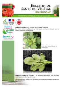 PRODUCTIONS HORTICOLES n° 15 du 02 octobre 2015