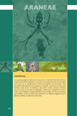 DESCRIPTION - Les insectes de nos jardins