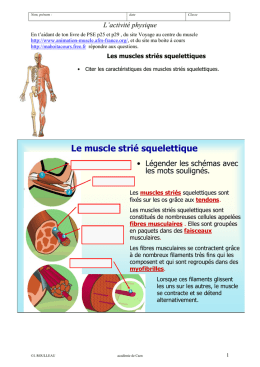 Le muscle strié squelettique