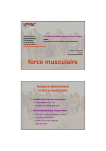 force musculaire - CHUPS – Jussieu