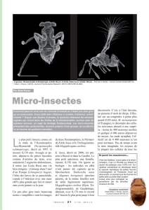 Micro-insectes / Insectes n° 176