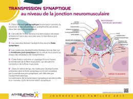 jonction neuromusculaire - AFM