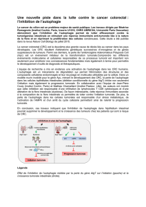 l`inhibition de l`autophagie