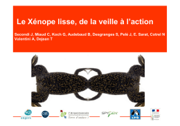 Le Xénope lisse - Gt-ibma
