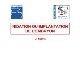 Illustrations NIDATION OU IMPLANTATION DE L`EMBRYON
