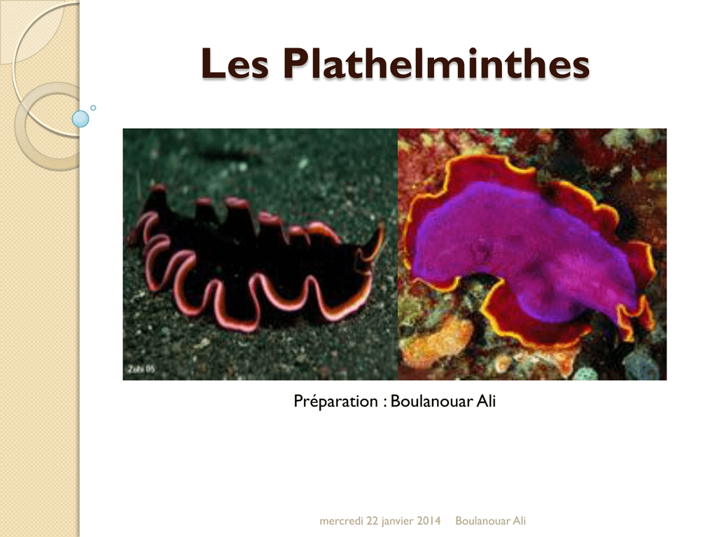 Les plathelminthes. PLATHELMINTHES - Definiția și sinonimele plathelminthes în dicționarul Franceză