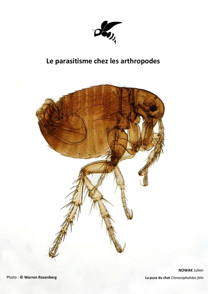 les arthropodes parasites de l homme