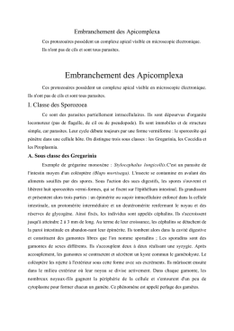 Embranchement des Apicomplexa