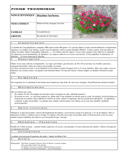 NOM SCIENTIFIQUE Dianthus barbatus.