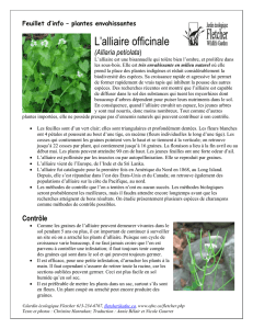 L`alliaire officinale