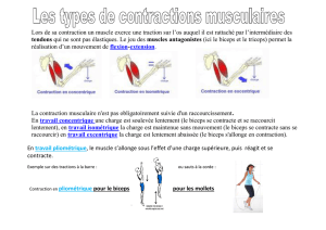musculation-les-contractions.pd