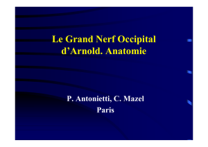 Le Grand Nerf Occipital d`Arnold. Anatomie