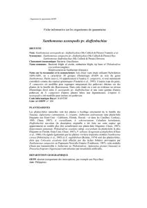 Etude des récepteurs TonB-dépendants et d`un nouvel effecteur de