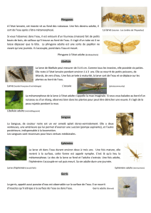 FICHE INSECTES RIVIERE