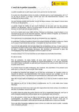 L uf de roussette scyliorhinus canicula incub au - Table nationale de codage de biologie ...