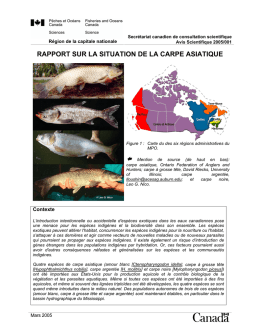 rapport sur la situation de la carpe asiatique
