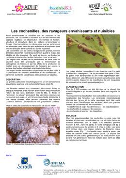 ennemi naturel de la cochenille