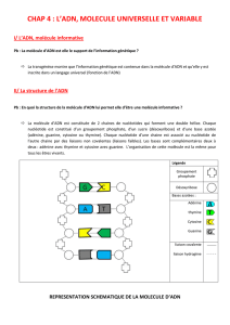 chap 4 : l`adn, molecule universelle et variable