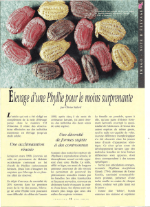 Elevage d`une Phyllie / Insectes n° 144