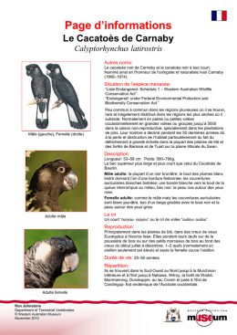 Information Sheet - Carnaby`s Cockatoo