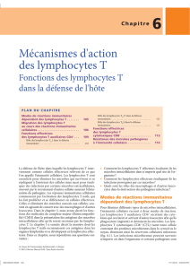 Mécanismes d`action des lymphocytes T