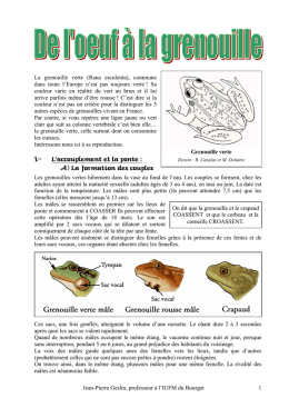 Reproduction Grenouille J-P Geslin