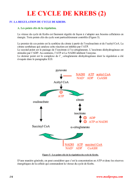 le cycle de krebs (2)