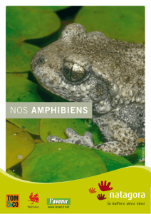 Nos amphibiens - Batraciens.be