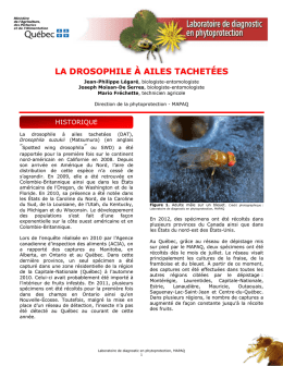 La drosophile à ailes - Agri