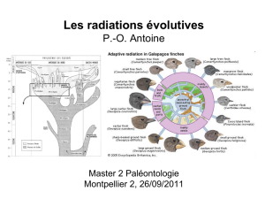 Les radiations évolutives