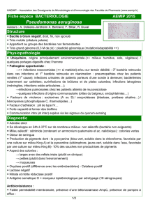 Fiche INTERNAT Pseudomonas aeruginosa version finale