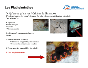 Les Plathelminthes