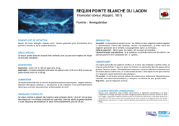 requin pointe blanche du lagon - IFRECOR Nouvelle